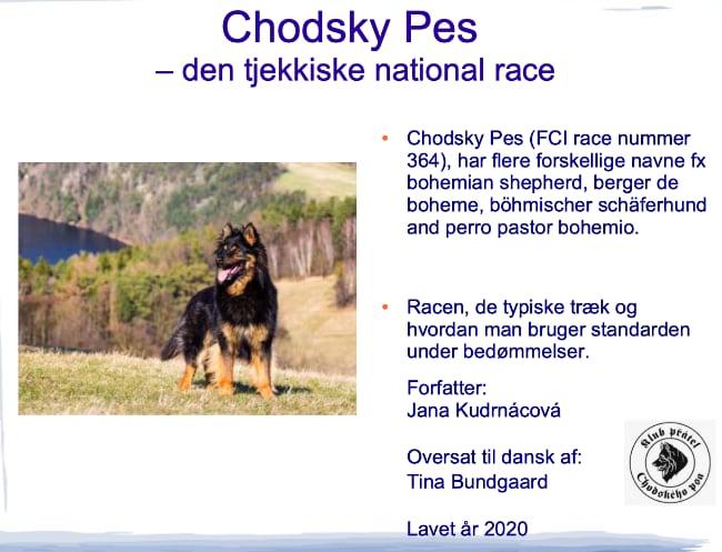 Chodsky Pes Tjekkiske